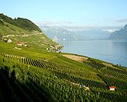 Lavaux, vignoble en terrasses
