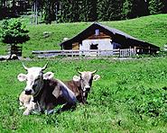 Heidis Heimat