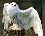 Parco degli uccelli rapaci di Buchs