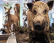 Naturmuseum Thurgau