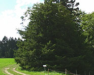Brüelhohle (Heimiswil)