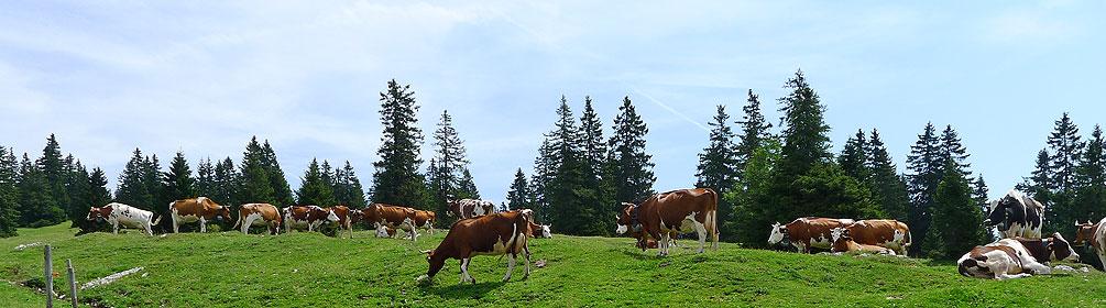 7 Jura-Route